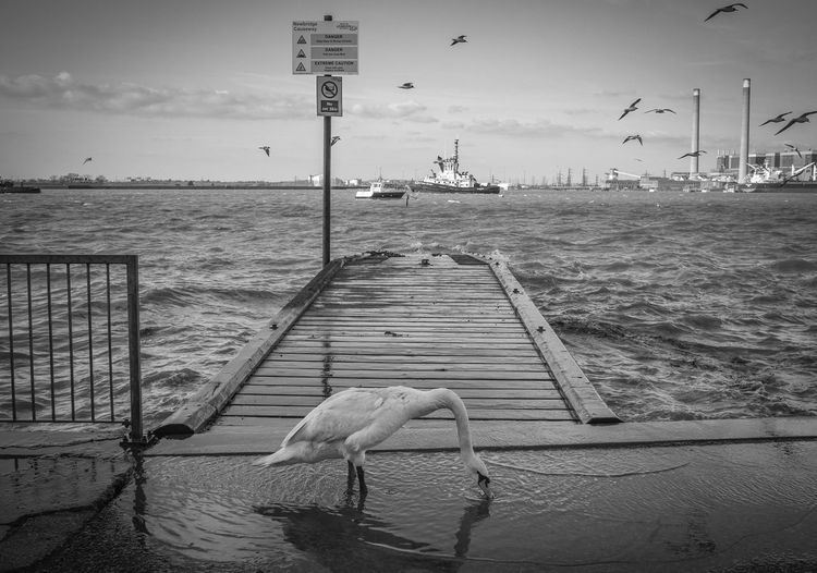 Swan perching on jetty by river against sky