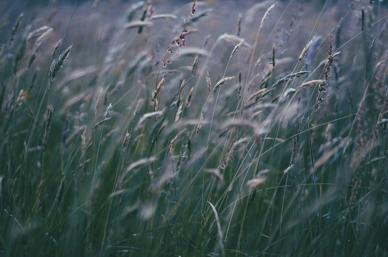 Waving Calm Beauty In Nature Tranquil Scene Day Outdoors Rural Scene VSCO Green Grass Fragility Full Frame Botany Natural Pattern Focus On Foreground Showcase June