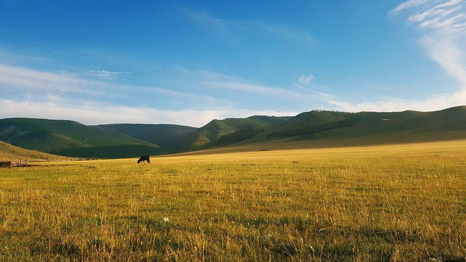 Mongolia Khuvsgul Mongolian Nature Autumn Colors S7Edgecamera