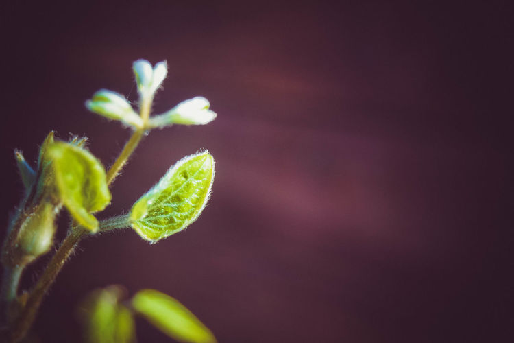 Leaf Plant Part Close-up Plant Growth Beauty In Nature Green Color Nature No People Fragility Vulnerability  Selective Focus Beginnings Focus On Foreground Day Freshness Outdoors New Life Tranquility Botany Space For Text Space For Copy