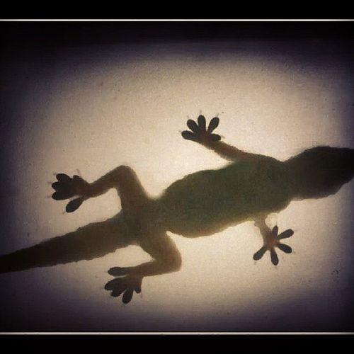 Reptiles Navigator  Shadow Onlyforyougirls