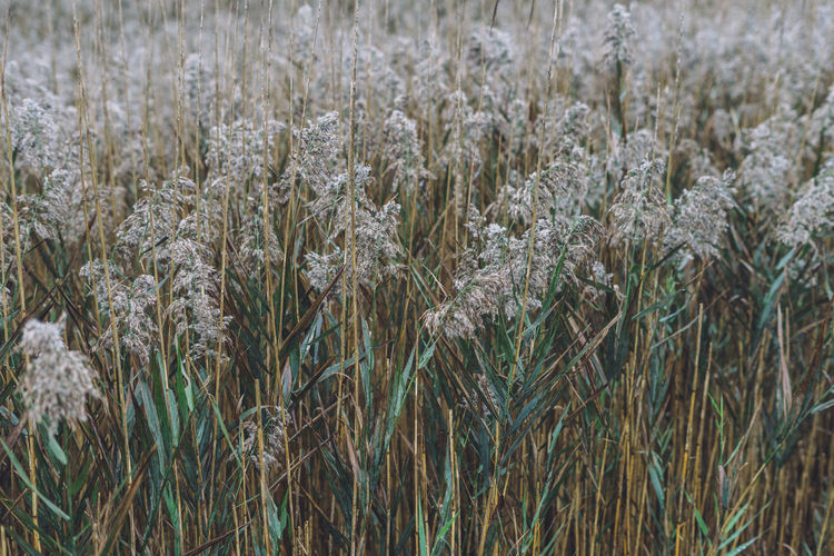 grasses in the rain Plant Growth Beauty In Nature Land No People Field Nature Tranquility Agriculture Day Crop  Close-up Full Frame Backgrounds Selective Focus Cereal Plant Rural Scene Landscape Outdoors Farm Stalk