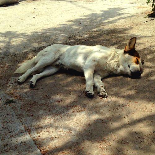 Domestic Animals Dogslife Sleeping Outdoors
