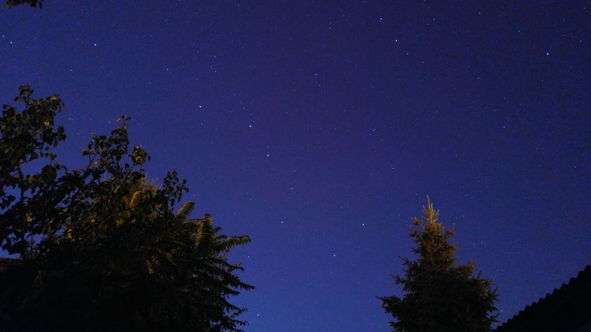 Star - Space Astronomy Tree Night Space And Astronomy Low Angle View Sky Nature Space Constellation Galaxy Beauty In Nature Tranquility Pine Tree Tranquil Scene Star Field No People Outdoors Space Exploration Pinaceae Lg V10 LGV10