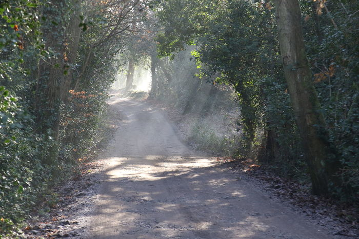 Beauty In Nature Day Nature No People Outdoors Shafts Of Sunlight Sun Through Trees Sunlight Surrey Countryside Track Tree Walking Winter