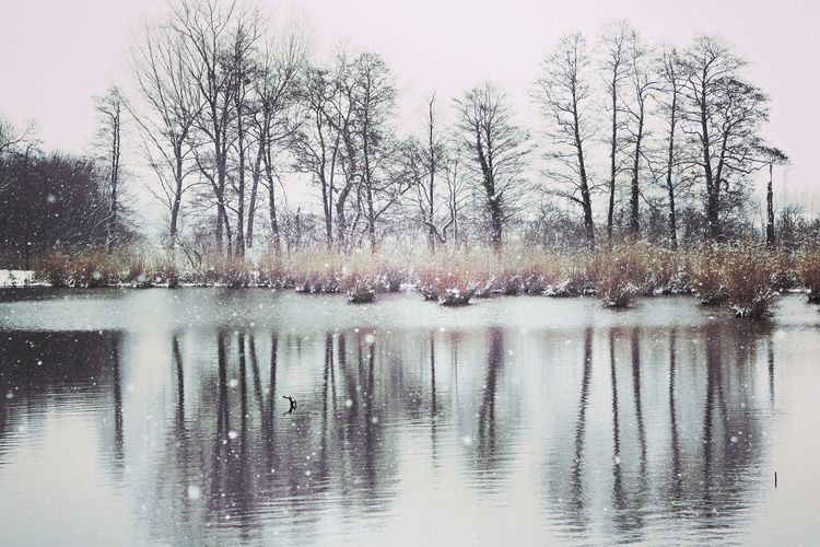 Winter in my