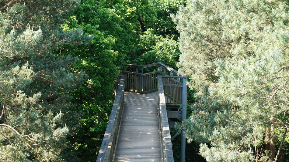 Beauty In Nature Day Diminishing Perspective Forest Green Green Color Greens Growth In The Trees Lush Foliage Nature No People Outdoors Plant The Way Forward Tranquil Scene Tranquility Tree Treetopwalk Wooden Wooden Walkway