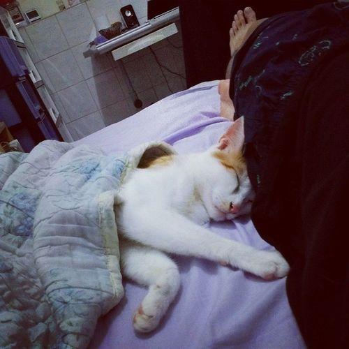 睡了又醒 醒了再睡. 貓咪做夢 Msu