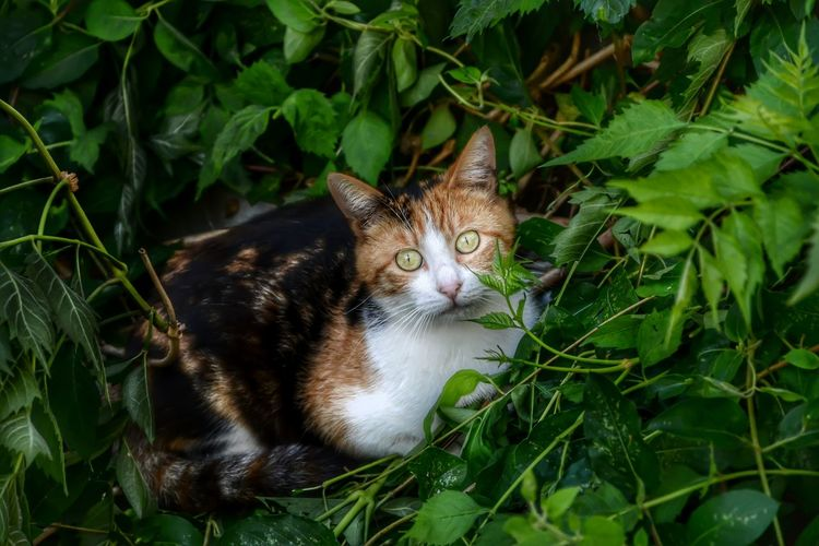 Cats Of EyeEm Animal Animal Themes Cat Domestic Cat Green Color Leaf Nature One Animal Pets Plant Part Relaxation