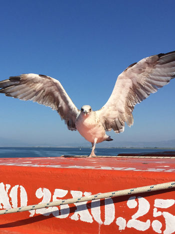 Greece Seagull Summer Traveling Iphone6