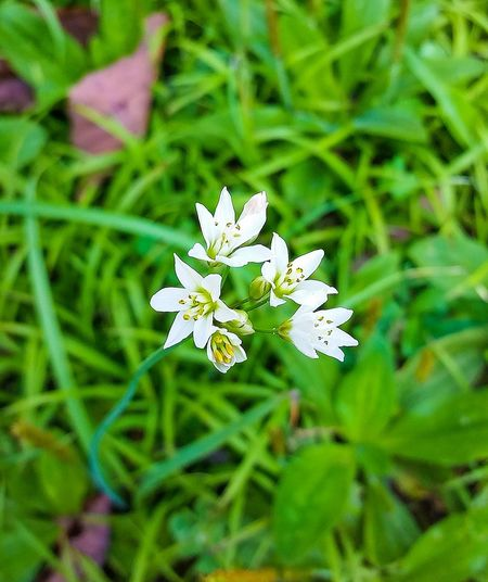 Nature Flower Growth Beauty In Nature White Color Plant Flower Head Fragility Petal Outdoors Close-up No People Freshness Day Insect Flowers Nature Flowers_collection Flowers, Nature And Beauty Flowermagic SmallFlowers Small Flower