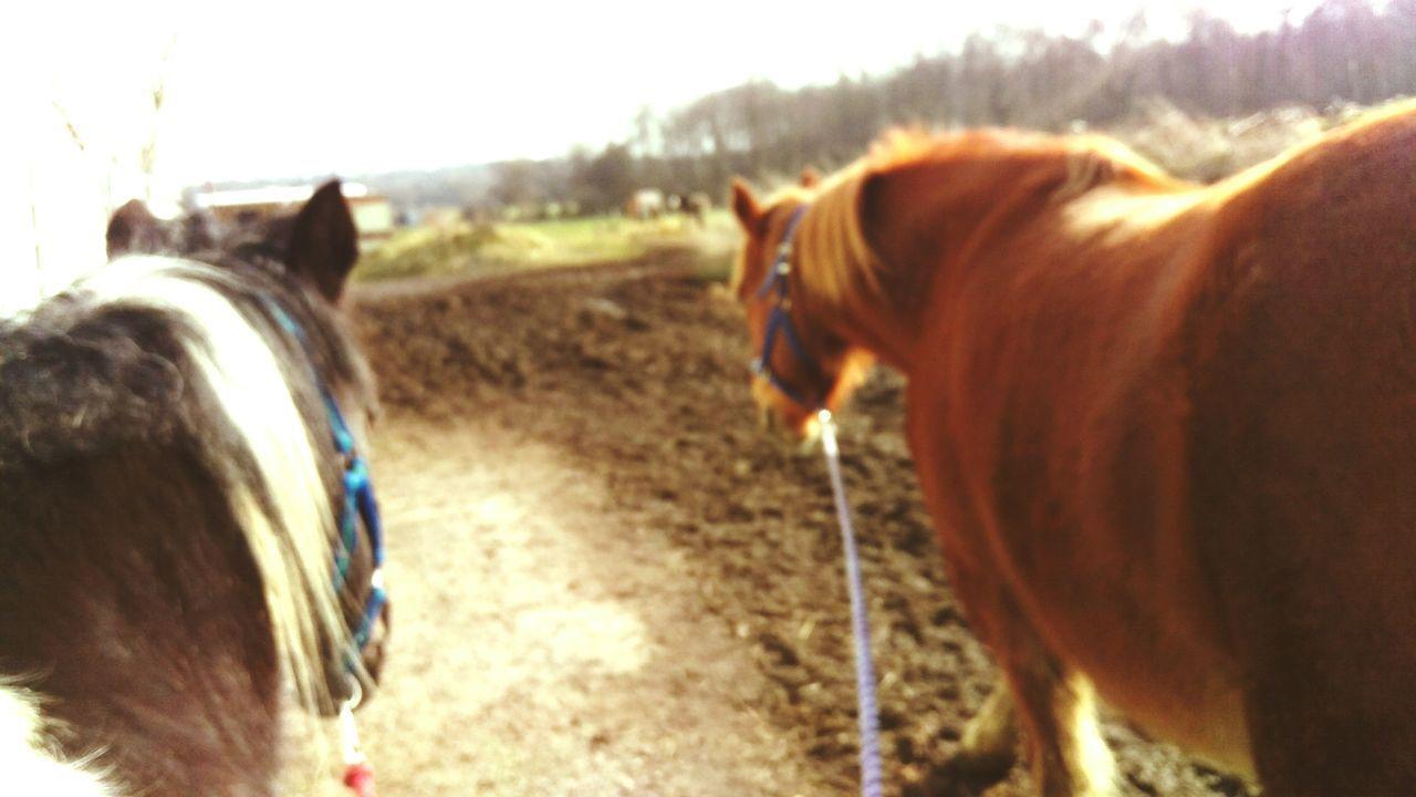 Horse On Field