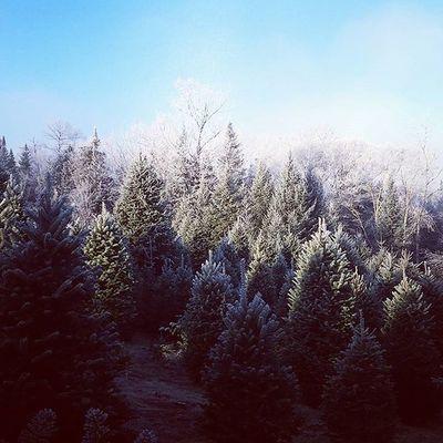 Snow Christmastree Christmas