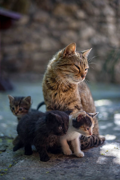 Animal Animal Family Animal Themes Cat Day Domestic Domestic Animals Domestic Cat Feline Group Of Animals Kitten Mammal No People Pets Togetherness Two Animals Vertebrate Whisker Young Animal