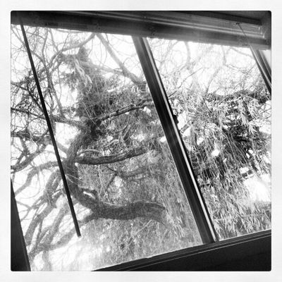 Monster at the Window . Blackandwhite Tree Instatree Updaily All_shots Instadaily Instapics Fall Rainy Day Rain Texture Rain On The Window Tree_collection  TreePorn Black & White B & W Texture