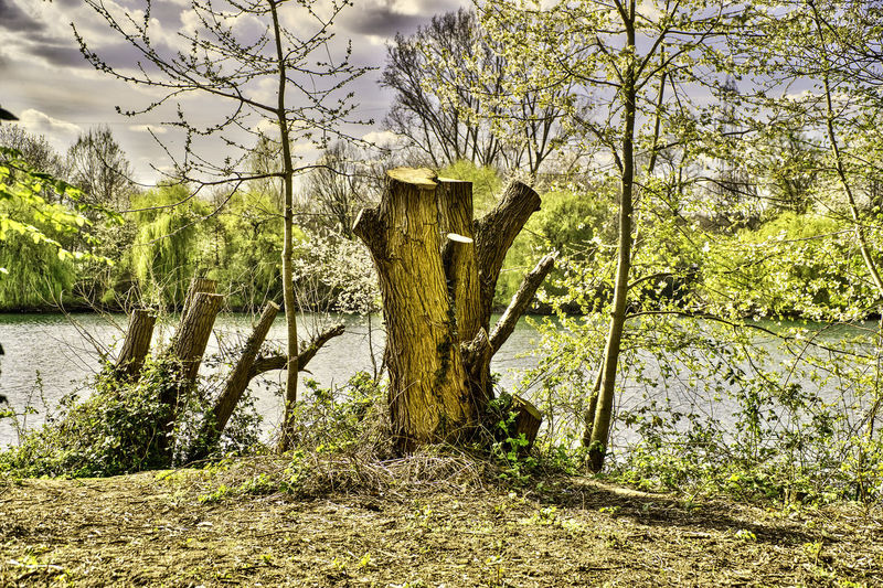 Am Lanker See Baumstumpf Beauty In Nature Day Forest Landscape Nature No People Outdoors Scenics Sky Tranquil Scene Tranquility Tree Tree Silhouette Tree Stump Tree Trunk Water