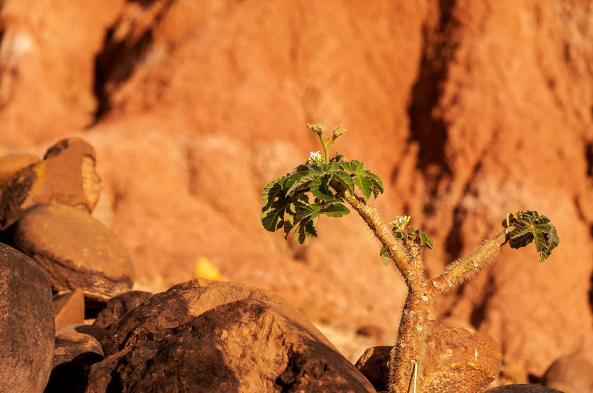 Small green plant struggling to survive in red Tatacoa Desert in Huila, Colombia Arid Blue Clouds Colombia Desert Drought Dry Heat Hot Huila  Landscape Nature Pillar Red Rock Sand Scenery Sky Stone Tatacoa Tourism Travel Valley View Wilderness