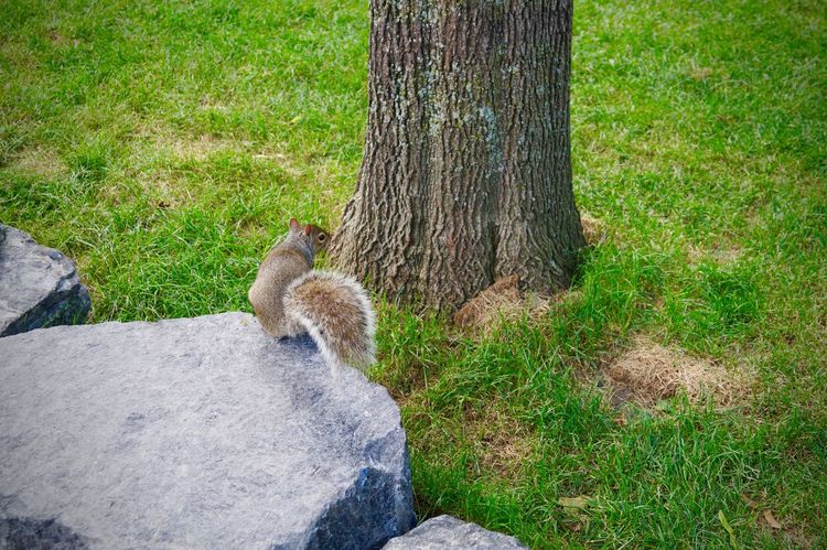 One Animal Grass Tree Trunk Nature Animal Themes Mammal Outdoors Animals In The Wild Squirrel Day Animal Wildlife No People Tree