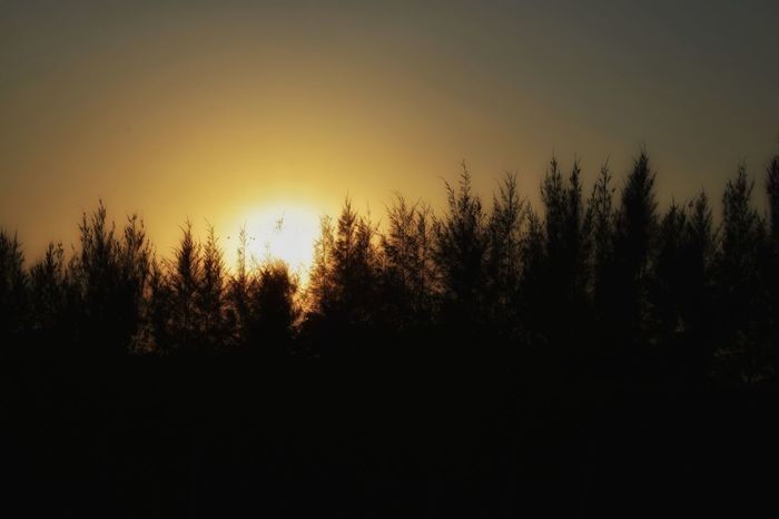 Mr. Sun behind the trees. KolkataStreets Silhouette Trees Jawdropping Lenscrafters Shotwithlove Sunset Yellowish