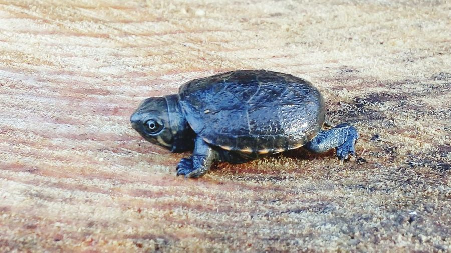Animals In The Wild One Animal Reptile Tortoise Turtle Tortoise Shell Wood