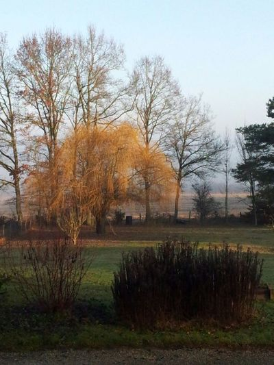 Winter lights Golden Light Hazy Day My Garden Weeping Willow