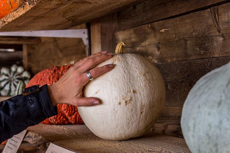 Human hand touching pumpkin