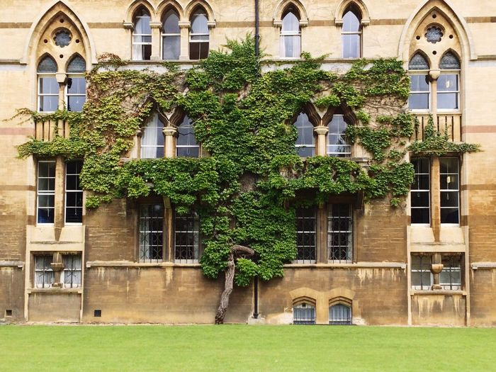 Ivy Ivy Wall Ivy Covered Ivy Leaves Christ Church College Oxford Alice In Wonderland Flat Lawn Green Sandstone Building Architectural Detail Faces In Places Building Exterior British Tree Natural Shapes Natural Beauty Buildingsandtrees