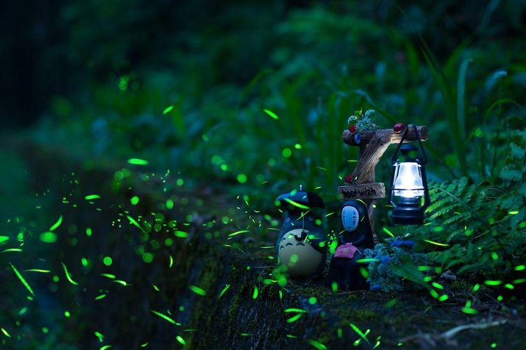 宮崎駿 螢火蟲