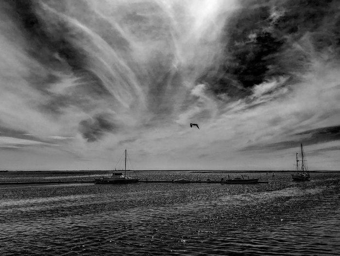 Olhao Algarve Portugal Landscape Boats Seagull Blackandwhite