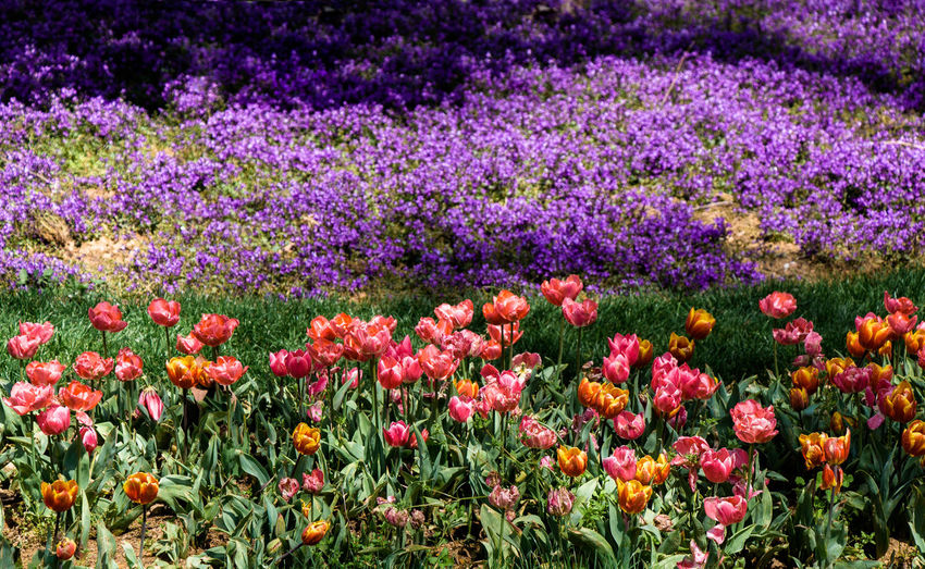 Fresh purple flowers in field
