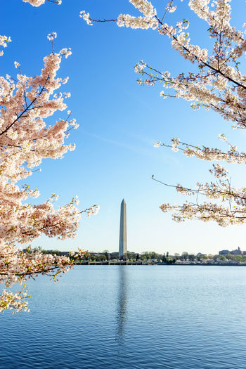 Capital Cities  Cherry Blossoms City Scape Easter Here Belongs To Me Jefferson Lake Landscape Lincoln Memorial Monument Morning Pastel Photography In Motion Season  Sightseeing Things I Like Tree Urban Urban Spring Fever Washington Washington, D. C. Showcase April Blue Wave Colour Of Life