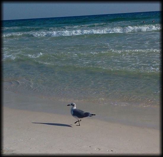 Landscapes With WhiteWall Waves Oceanside Seagulls And Sea Tropical Paradise Beach Photography Ocean Bird Seagull Beach Ocean