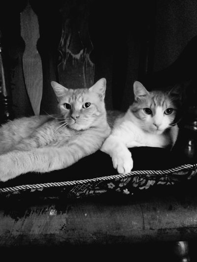 When you know you look good 💙 Cats The Life Of A Kitty Pet Photography  Lounging We Are Superior Black And White My Fur Babies Feline Curiosity Whiskers Indoors  My Heart And Soul
