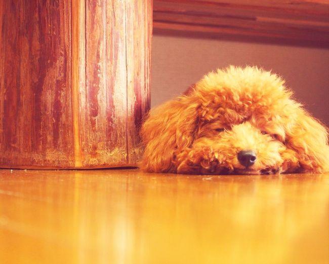 Sleeping dog ....... First Eyeem Photo