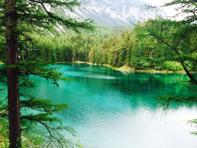 Tree Tranquil Scene Beauty In Nature Scenics Water Nature Mountain Lake Outdoors