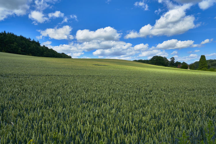 Views of the Malvern Hills in Worcestershire, UK, set against a blue sky with fluffy white clouds. Agriculture Beauty In Nature British Countryside Day Field Grass Green Color Growth Landscape Malvern Hills Nature No People Outdoors Rural Scene Scenics Sky Tranquil Scene Tranquility Tree