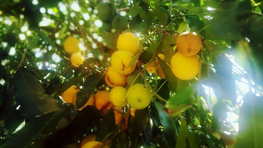 La Mejor Fruta Achachairu