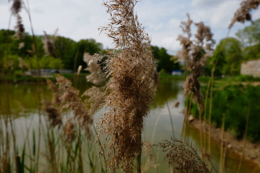 Beauty In Nature Close-up Day Focus On Foreground FUJIFILM X-T10 Growing Growth Landscape Nature No People Outdoors Park Plant Selective Focus Taking Photos The Great Outdoors - 2016 EyeEm Awards Tranquility Walking Around Wasiak