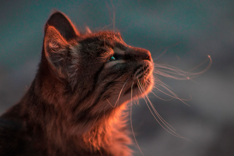 Close-Up Of Cat Looking Away Outdoors