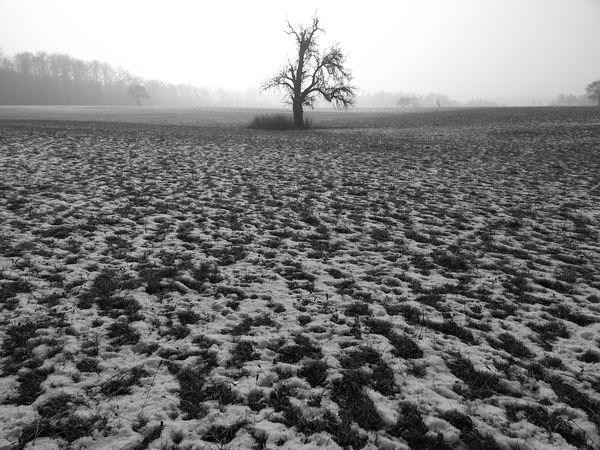 Beauty In Nature Cold Temperature Day Isolated Lone No People Outdoors Scenics Tranquil Scene Tree