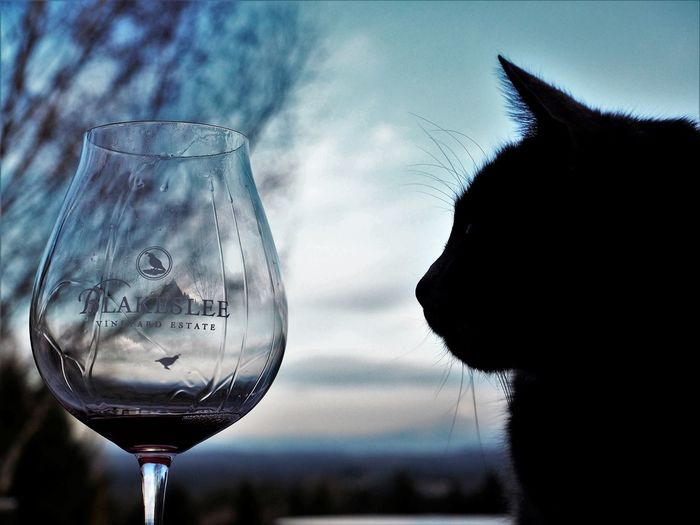 Alcohol Animal Themes Close-up Day Domestic Animals Drink Drinking Glass Focus On Foreground Food And Drink Mammal No People One Animal Outdoors Pets Sky Water Wine Wineglass