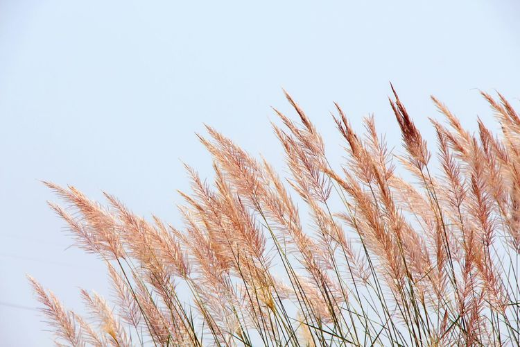 OpenEdit Sky Grass Outdoors Clear Sky Nature Beauty In Nature Landscape Landscape_photography Landscape_Collection
