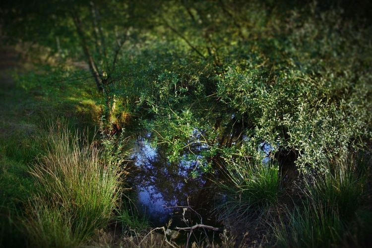 Beauty In Nature Dutch Photographer Grass Landscape Moreland Nature No People Outdoors Tranquil Scene Tranquility Water