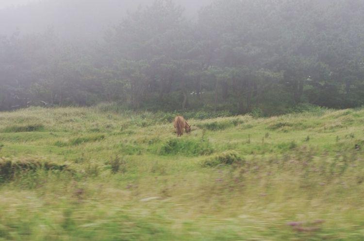 Horse Jeju Nature