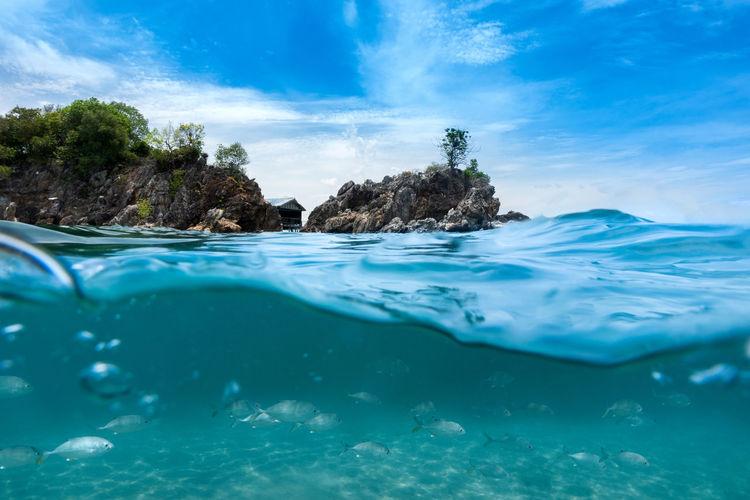 Group of fish swimming near island in the sea,phuket thailand in the summer,kohkhai island.
