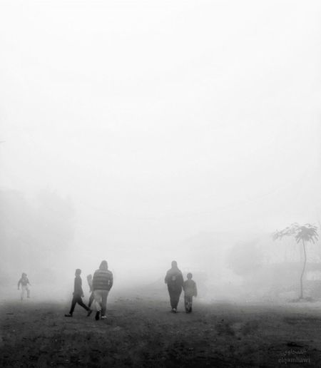Leave Nature Outdoors Fog Day White People And Places Streets Whiteandblack