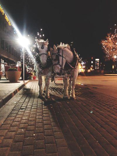 Teamwork Holidays Horses Equine Night Illuminated Mammal Animal Themes Animal Street Domestic Animals City Lifestyles Paving Stone