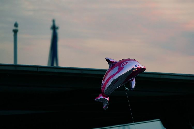 air diving No People Low Angle View Flying Outdoors Nature Sky Hamburg Harbour Sunset Minimalism Hippstergraphy Abstract Photography Abstract Hamburg Flipper Dolphin Balloon Ballons In The Sky SONY A7ii Harbourview