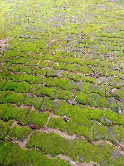 a cobblestone pathway covered with green fungi Backgrounds Full Frame Agriculture Field Grass Green Color Animal Themes Close-up Rice Paddy Farmland Terraced Field Rice - Cereal Plant Asian Style Conical Hat Hay Bale Ho Chi Minh City Stalk Horticulture Straw Greenery Green Cultivated Land