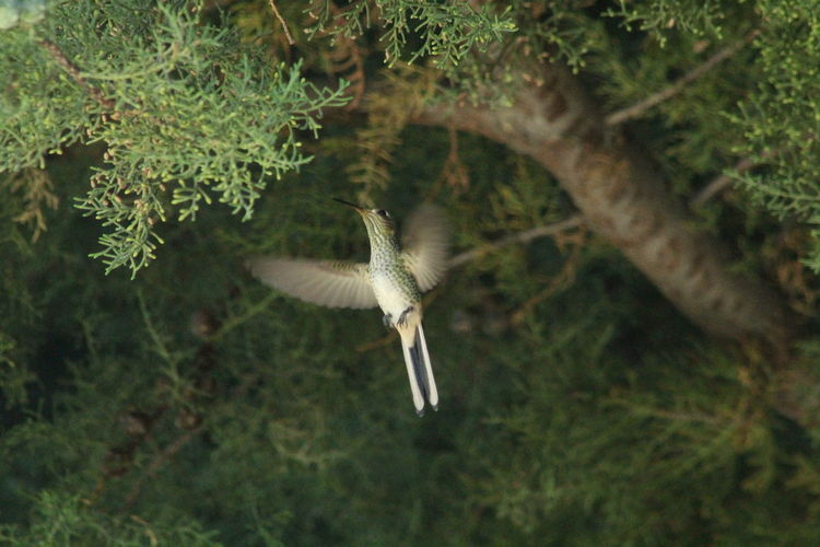 Bird flying over green tree